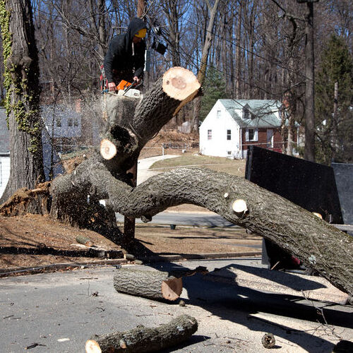 A Fallen Tree Gets Removed.