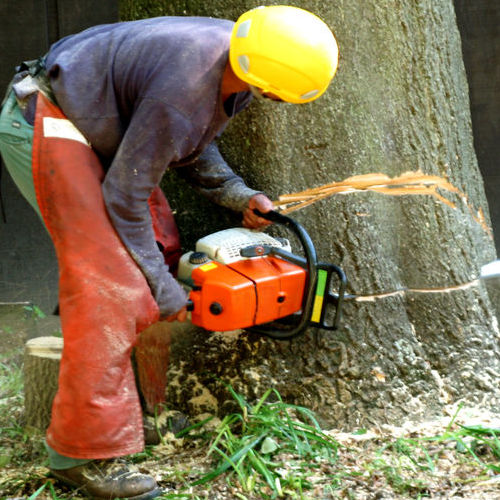 A Tree Removal Services Cuts Down a Tree.