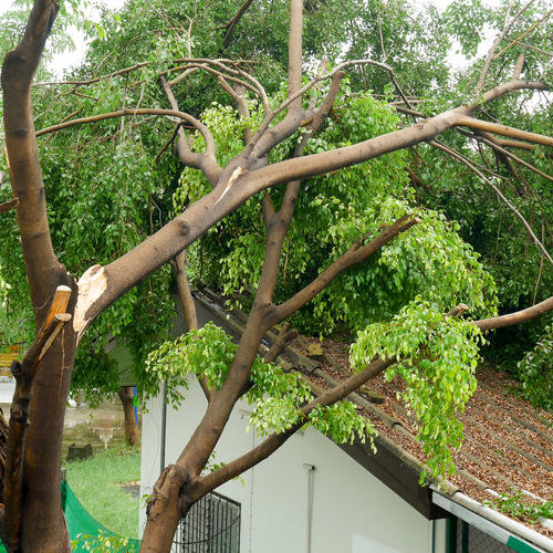 Fallen Tree Branches on Roof.