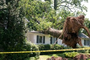tree lands on roof after a big storm