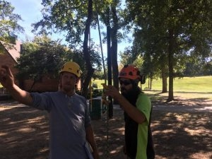 About Our Tree Services