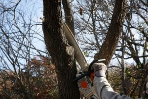 Benefits of Tree Trimming and Pruning Services