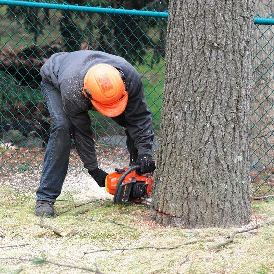 We Offer Tree Removal Services For When Homeowners Need Them Gone.