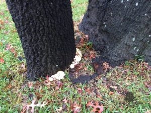 Diseased Tree Diagnosis and Treatment