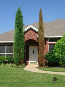 Sick Tree Treatment in Fort Worth, TX