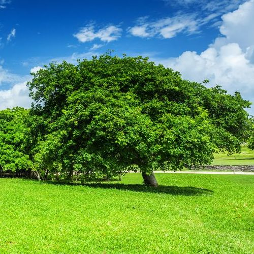 Yearly Tree Maintenance Benefits Many Trees
