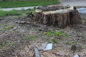 Tree Planting and Stump Removal